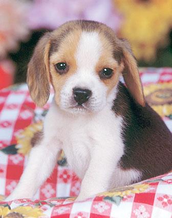 Do u own a pet ?? - have a dog ??...or a cat??/  or any other pet ???