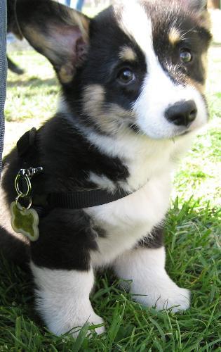 Well, ain't that sweet? awww - puppy