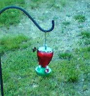 the little ruby man - a hummingbird i played with for a bit tonight that stopped and posed for a pic for me =o)