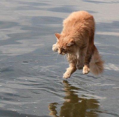 eeeeeekkk! - Kitty no like water
