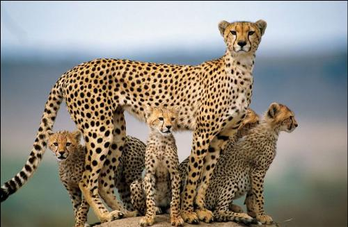 Family - Even cats are loving responsible creatures, why cant mankkind be one