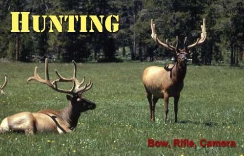 Hunting - Is hunting cruel or needed?