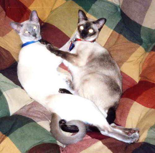 Bobo (left) and Gracie - He's still with us but has head trama