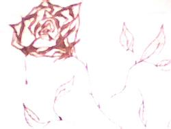 ~~*~~ - Drawing of a Rose...August 2005