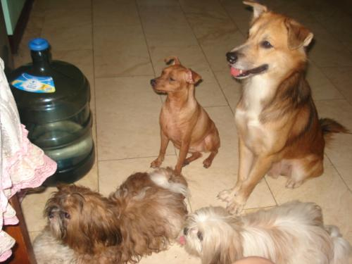 all my dogs - very cute dogs