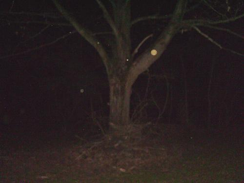 Orbs - On a ghost hunting expedition, this is one of my orb pics....