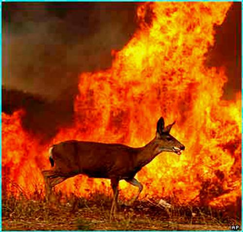 wild life killed - because of the forest fires in california....wild life is reduesed massively!