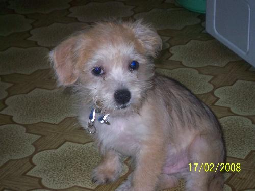 Meet my Benjie... - He was only 3 months old when this photo was taken...