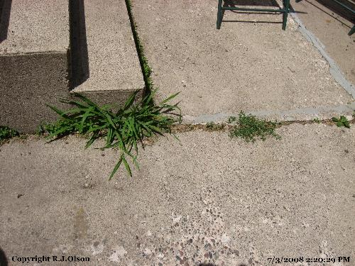 Dang Weeds - Too funny I don't take care of these weeds