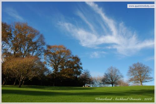 Wintry Domain - A winter day at the Auckland Domain, New Zealand.