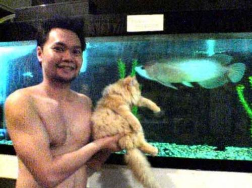 myself , garfield-my girlfriend's cat and goliath  - here you can see how my pet arowana competes getting my attention from our cat.