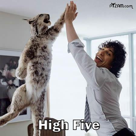 high five - high five!