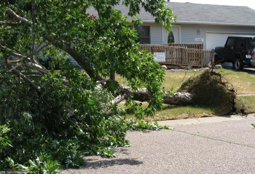Uprooted - Happened in Apple Valley Minnesota 7-10-2008