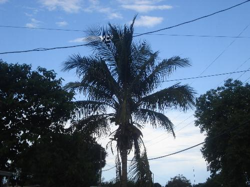 Our palm tree - our palm tree