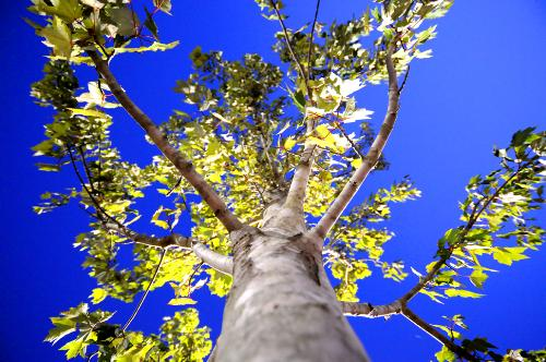 Wide Angle Tree - I took this photo using a 10-20mm lens on a Nikon D300.