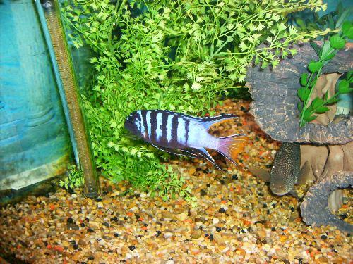 fishtank - my fishtank built in the wall