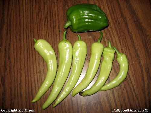 Bell and banana peppers - Picked fresh from my garden in Minnesota July 28th,2008.