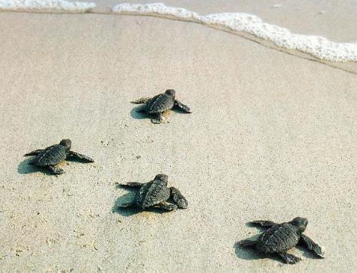 Turtle Race... - Turtle Race...