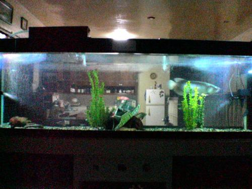 aqurium fish setup - my aquarium setup with 2 overhead filters and 2 underwater lights. a wrecked ship in the middle.
