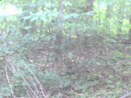 Another deer photo - Use your imagination a bit and you might be able to see the deer now. Still not a great pic though.