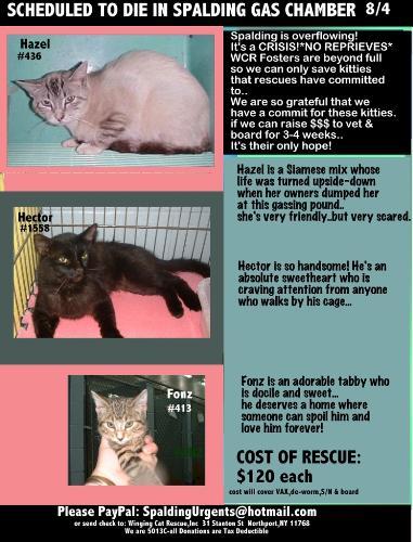 is fonz not a heartbreaker? - more cats needing help..