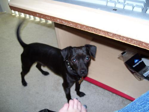 My dog teddy bear...  - My dog very unique dog teddy bear...
