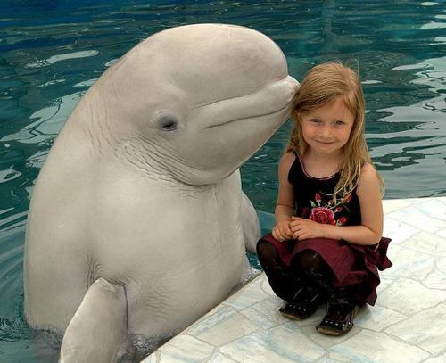animal in water - animal in water with little girl