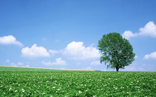 desktop picture1 - nature