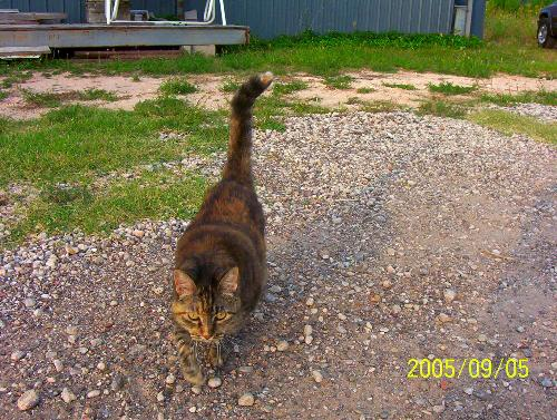 My Cat Gracie - This is my 14 year old cat, Gracie. She's the queen of the territory. Woe to any who intrude!