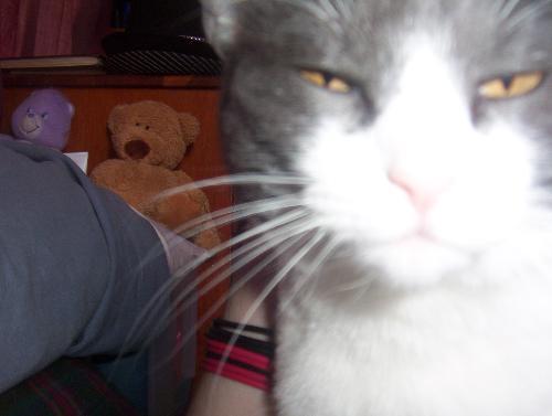 my cat izzy - My wonderfull cat