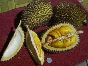 "Durian - Durian is known as the ""King of Fruits"""