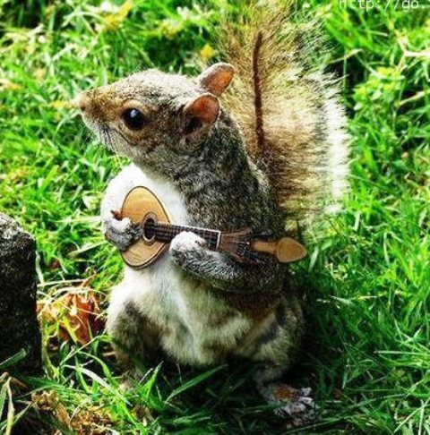 Squirrel Musician