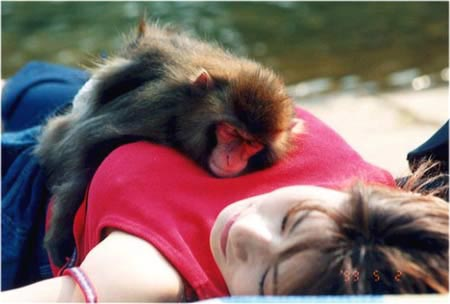 Would you like to be that monkey?  - Just look at the picture, I want to know if you would like to be that monkey?