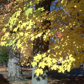 Fall colors - Absolutely breathtaking!
