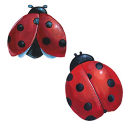 Ladybug Wallies - is what I have right now but where are the white daisies that I want?
