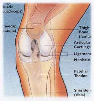 knees  - knees