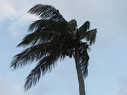wind, weather, cloudy, tree, windy - wind, weather, cloudy, tree, palm