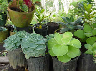 small potted plants - small potted plants, save the world today