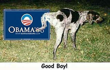 dog sense - Dog releving himself on Obama sign
