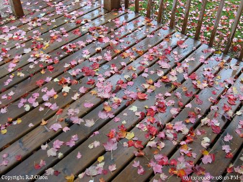 Patio Deck - More leaves to rake soon