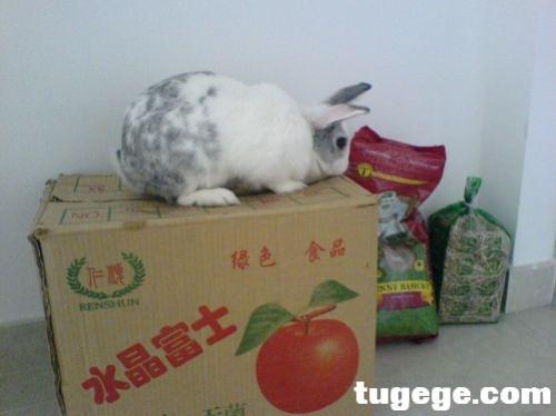 want open apple box - i want open apple box