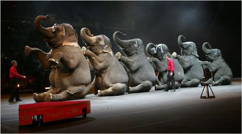 Circus - Circus...elefant show