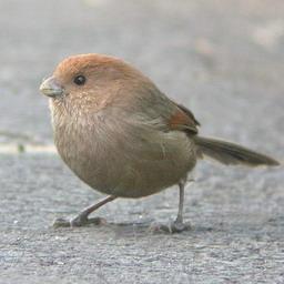 Early bird - Earyly bird has the worm