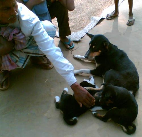 This is my pet dog and her puppies - This is my pet dog who has recently given birth to three puppies.