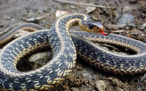Snakes - Snakes You catch it