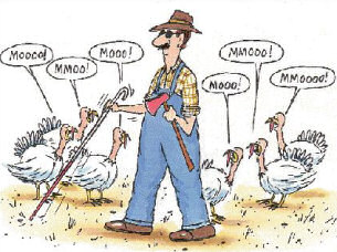 thanksgiving day - turkey day is almost here