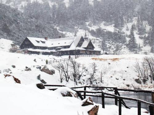 winter - winter snow