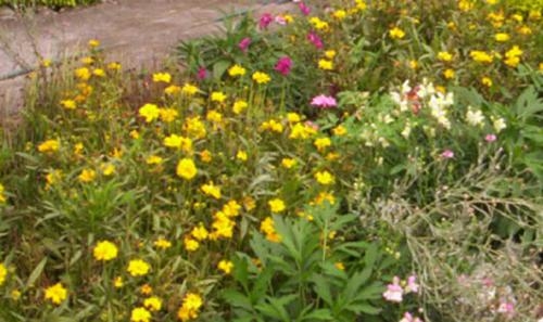 beautiful garden - it is only the portion of garden which contained a lot of variety of flowers in it.