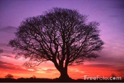 life - tree