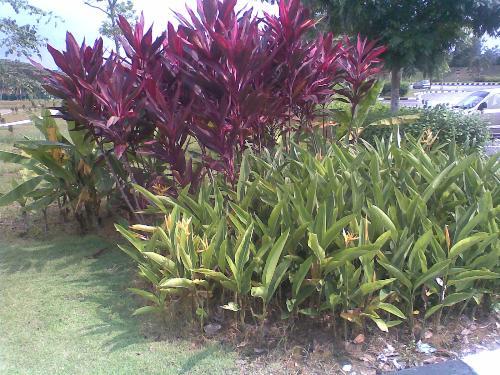 Nice Plants - Nice plants over here...